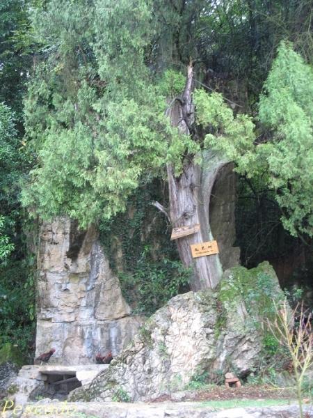 百年桦苑,千年橡园,万年榆林,聚仙阁,火牛阵,动物乐园,石龙峰,观景亭