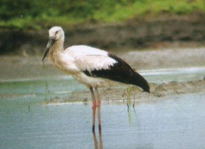 保护区内有兽类15种,两栖爬行类13种,鱼类32种,昆虫371种,浮游动物16