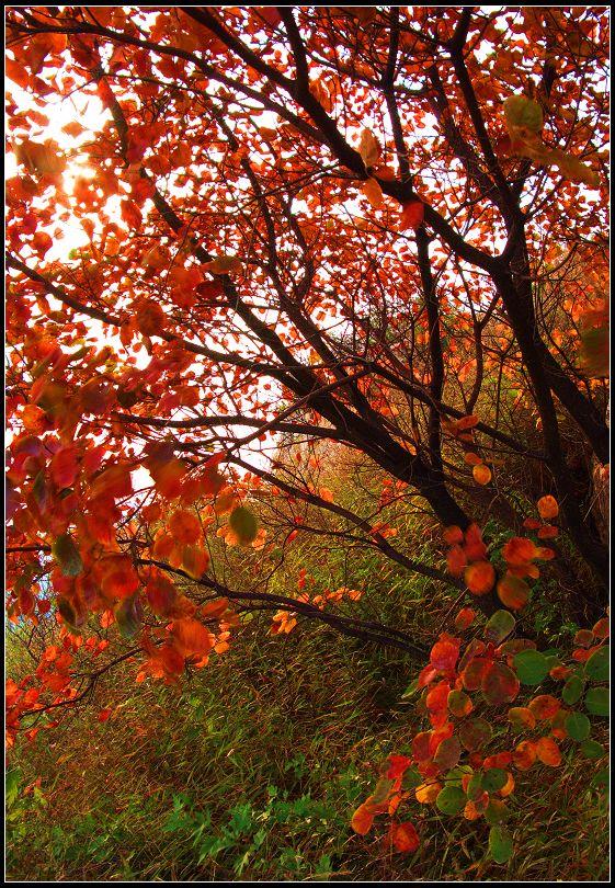 大鸿寨风景区位于河南省禹州市西北边陲鸠山乡境内