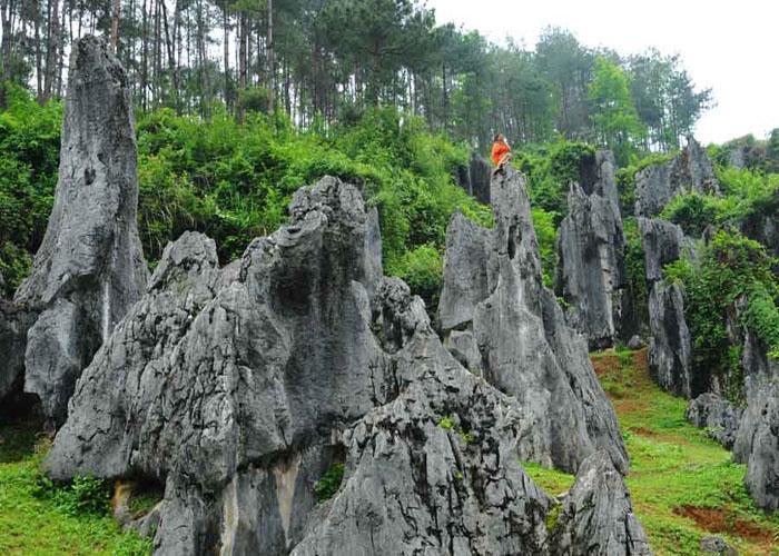 思南石林主要分布在贵州省思南县长坝景区和荆竹园景区,石林出露面积分别为4.9平方公里、2.3 平方公里。两片石林隔江相望,地表水沿可溶性碳酸盐岩的裂隙进行溶蚀和侵蚀,形成丛林状蚀余残留体,石林间有很深的石沟。