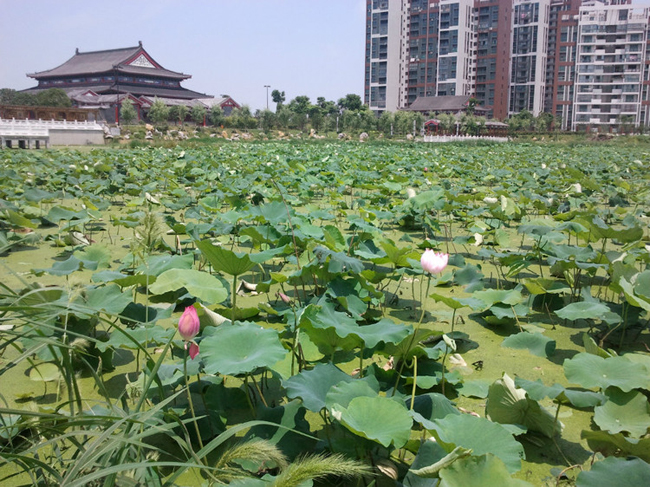 谭鑫培公园_旅游景点_江夏热线
