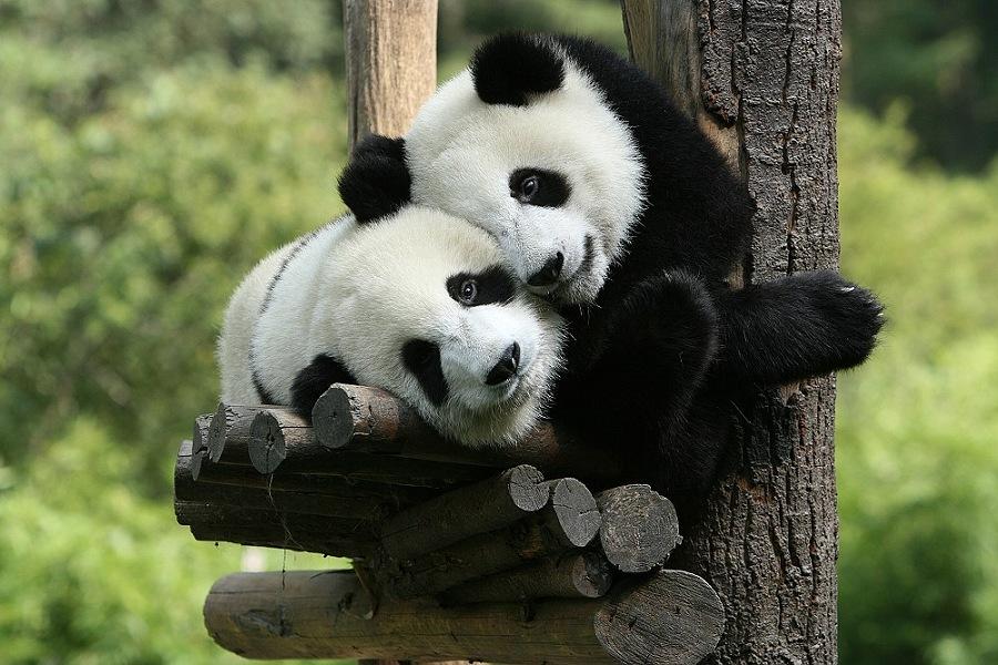 电厂熊猫设计作者