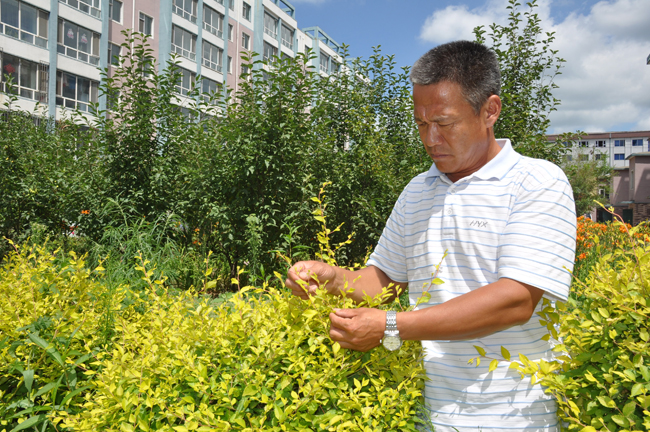 辉南县宏达园林苗圃