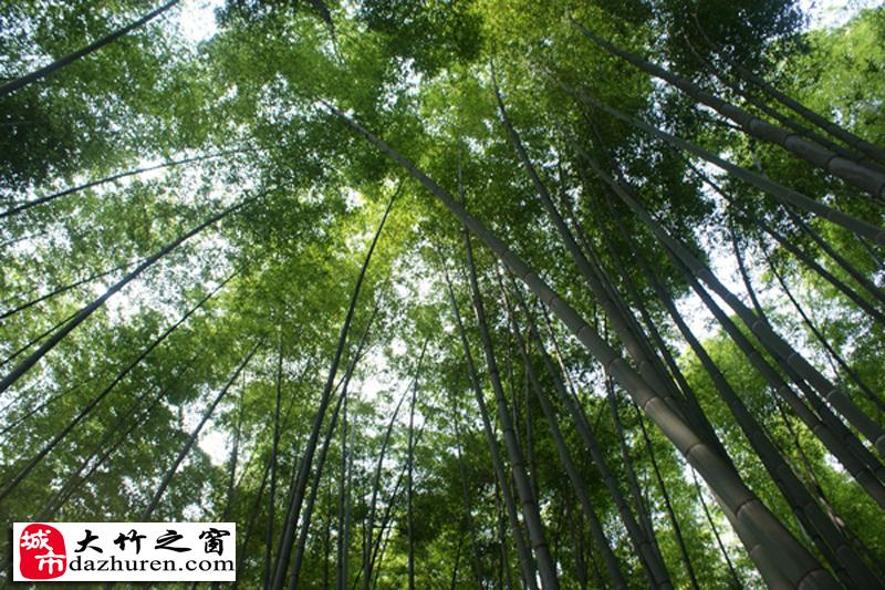 山以竹为主题,竹类品种达30余个,主要景观为遮天蔽日,苍翠挺拔的楠竹
